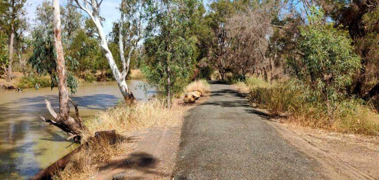 Nogoa-River-Trail